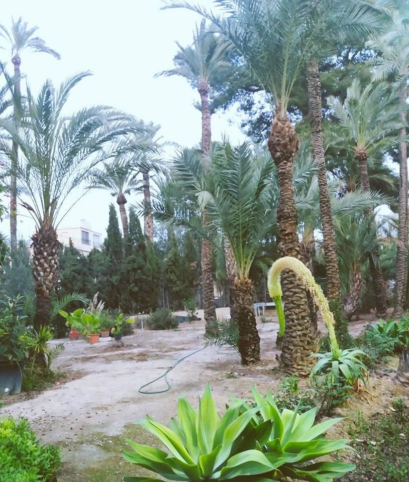 mezquita hort
