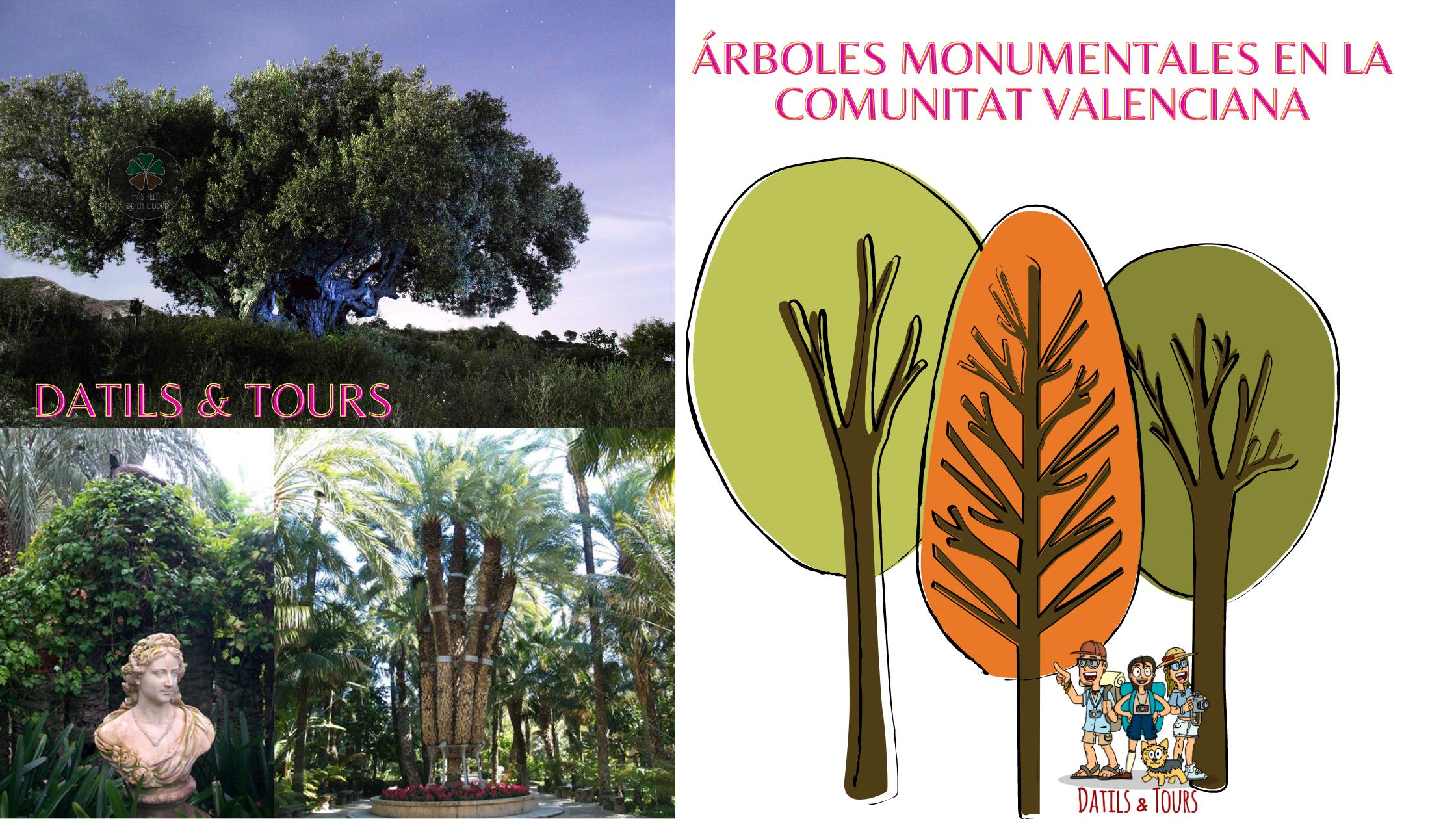 Árboles singulares en la Comunitat Valenciana